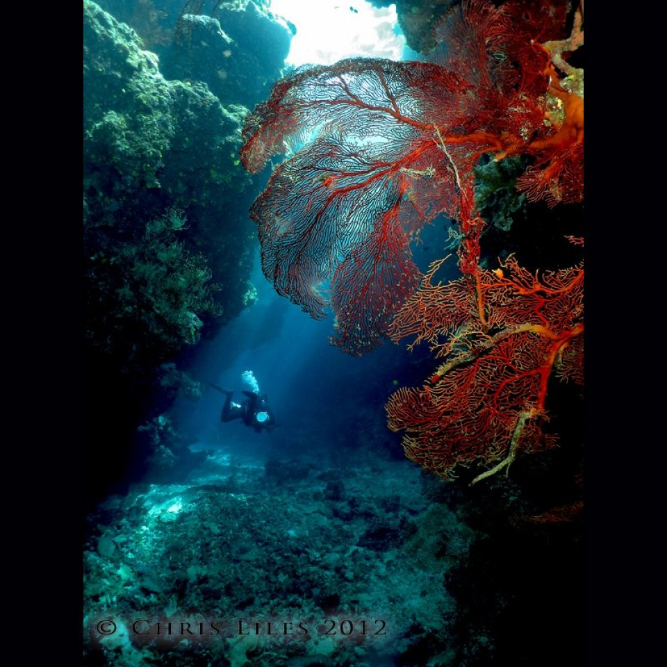 Cathedrals off E6 Bligh Water, Fiji - Dive Wananavu Fiji