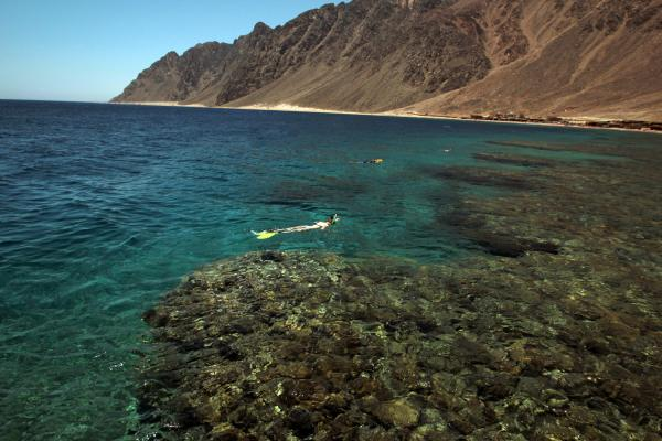 Lagona Divers - Dahab South housereef