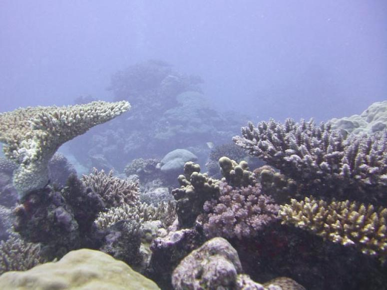 Coral Village is a huge garden of soft coral
